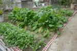 Garden_0294