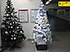 Tree_1303