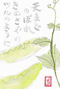 Midori_0001