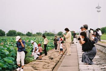 images/biwako_hasu_L06