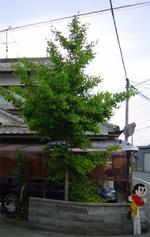 Ichou02