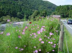 images/kosumosusabakaidou