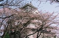 nagahamajou