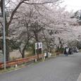 日当駅前の桜