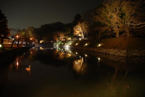 彦根城夜お堀の白鳥