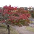 信楽陶芸の森の紅葉04