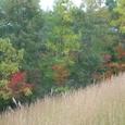 信楽陶芸の森の紅葉15