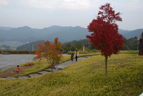 信楽陶芸の森の紅葉13
